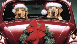 Noël_chiens1